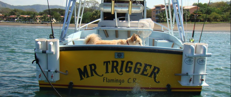This is the Mr. Trigger a 1988 26ft Morgan from Boca Raton Florida. Powered by a 4 cylinder Yanmar diesel engine with turbo it can get me and my clients to wear we need to be for the Billfish action. Whether it's a day with clients going 10 to 20 miles off the coast of Flamingo, Costa Rica or 100 miles out on a several day trip with friends this boat takes me where I need to be. Equipped with 4 tuna tubs on the back and a 65 gallon live well we specialize in live bait, lures, bait and switch with teasers, or fly fishing for these monsters of the Pacific Ocean off the coast of Flamingo, Costa Rica where Mr. Trigger has his home.
