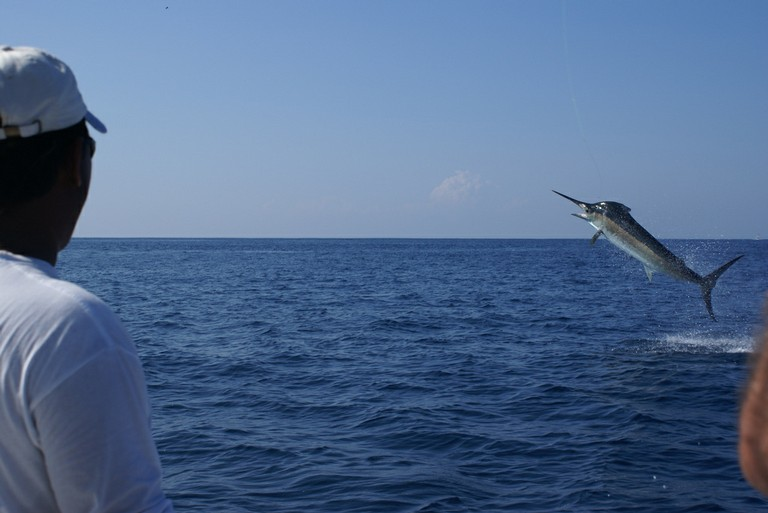 Marlin-Jump-three-fishing-charters-tours-costa-rica-pacific-coast.JPG - big