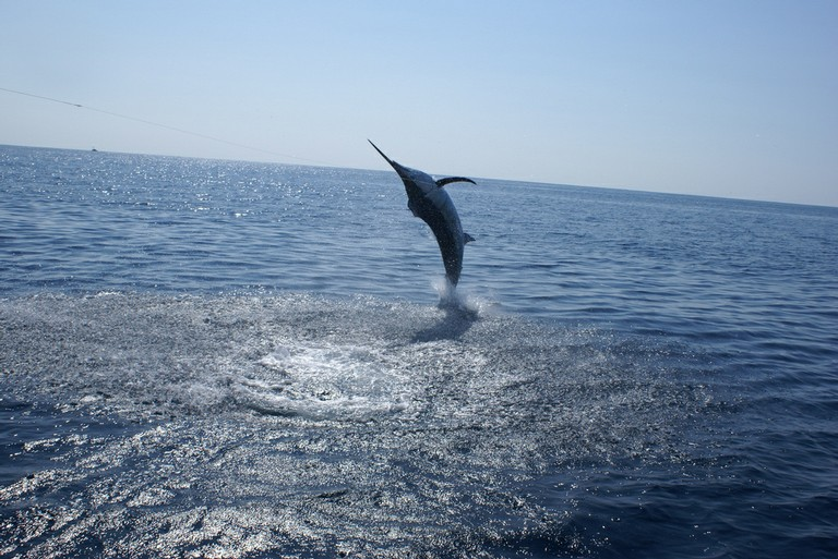 Marlin-Jump-two-fishing-charters-tours-costa-rica-pacific-coast.JPG - big