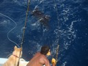 another-sail-fish-fishing-charter-tours-costa-rica - thumbnail