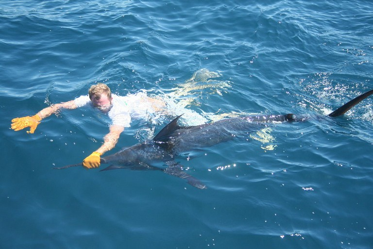 Costa Rica Marlin Fishing Flamingo fishing charters tours costa rica pacific coast.jpeg - big