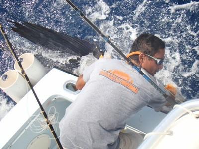Evelio strikes again fishing charters tours costa rica pacific coast stripe marlin - small