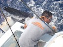 Evelio strikes again fishing charters tours costa rica pacific coast stripe marlin - thumbnail