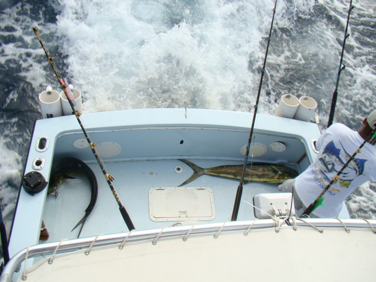fishing charter tours costa rica two dorado for dinner.jpg - big
