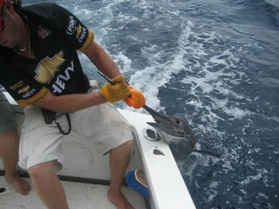 fishing charters tours costa rica pacific coast sail fish catch - small