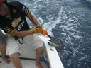 fishing charters tours costa rica pacific coast sail fish catch - thumbnail