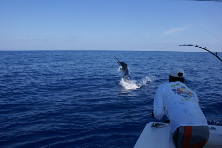 huge-marlin-catch-one-and-release-fishing-charters-tours-costa-rica-pacific-coast.jpg - big