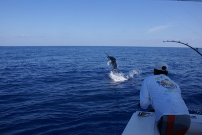 huge-marlin-catch-one-and-release-fishing-charters-tours-costa-rica-pacific-coast.jpg - small