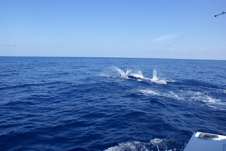 huge-marlin-catch-three-and-release-fishing-charters-tours-costa-rica-pacific-coast.jpg - big