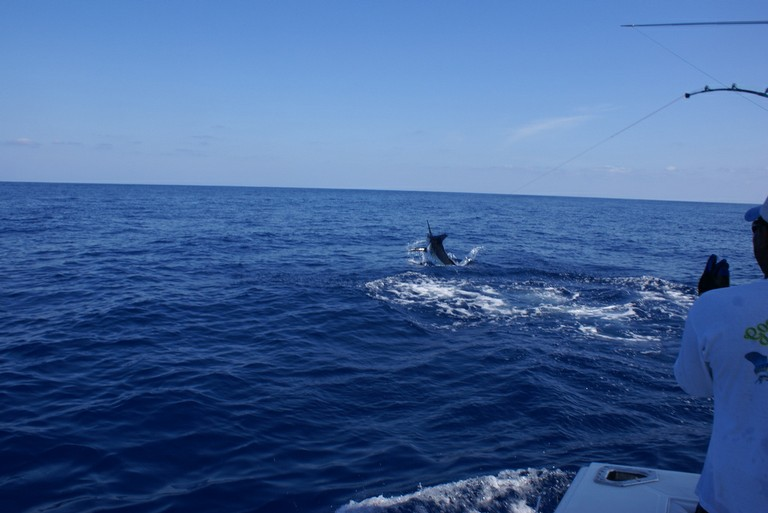 huge-marlin-catch-two-and-release-fishing-charters-tours-costa-rica-pacific-coast.jpg - big