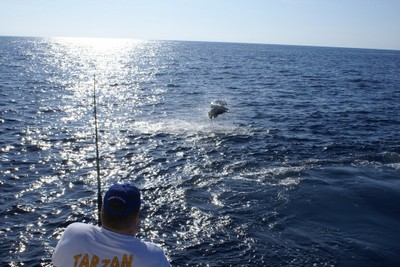 huge-marlin-catching-and-release-fishing-charters-tours-costa-rica-pacific-coast.jpg - small