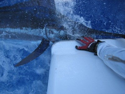 marlin-catch-and-release-fishing-charters-tours-costa-rica-pacific-coast.jpg - small