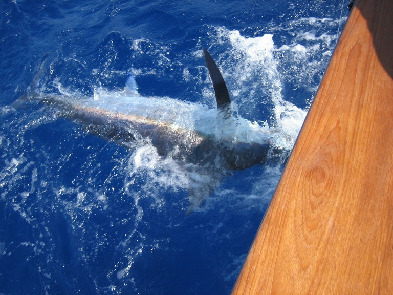 marlin-catch-two-fishing-charters-tours-costa-rica-pacific-coast.jpg - big