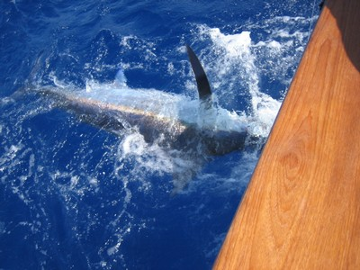 marlin-catch-two-fishing-charters-tours-costa-rica-pacific-coast.jpg - small