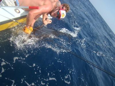 Marlin Swim fishing charter tours costa rica .jpg - small