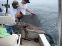 Sailfish Catch fishing charter tours costa rica pacific coast.jpg - thumbnail