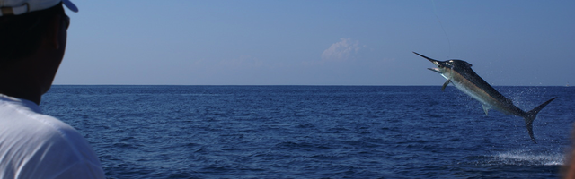 A collection of experienced Fishing charters in Costa Rica